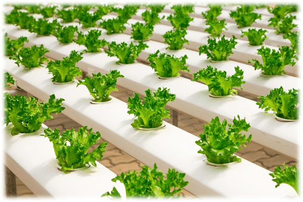 Hydroponics 101: How it ALL comes down to vapour pressure deficiency (VPD)